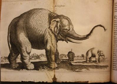 30 c 333 - elephant.JPG