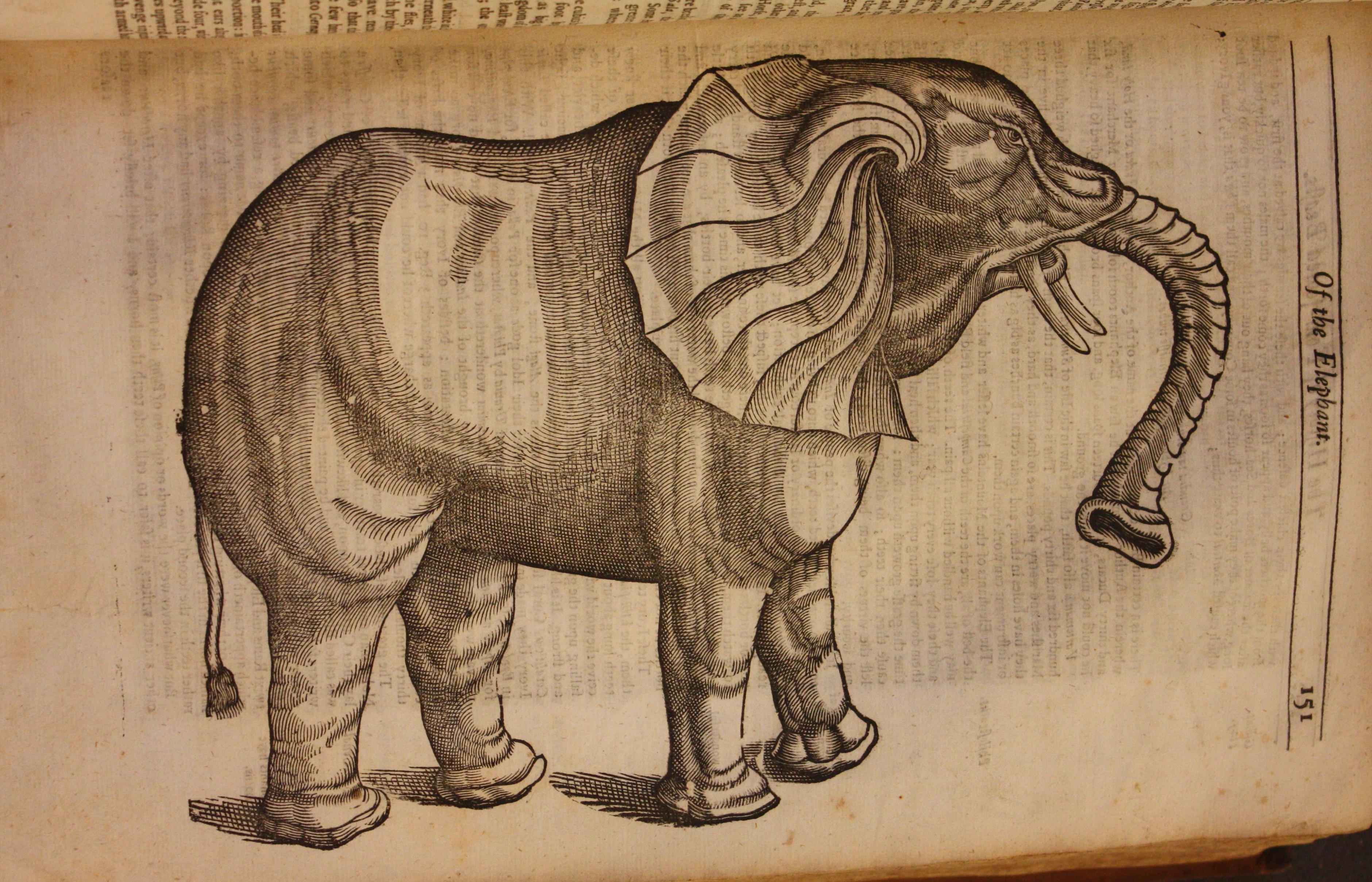 470 d 19 - Topsell's elephant