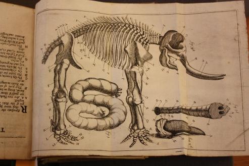 470 g 14 - plate skeleton.JPG