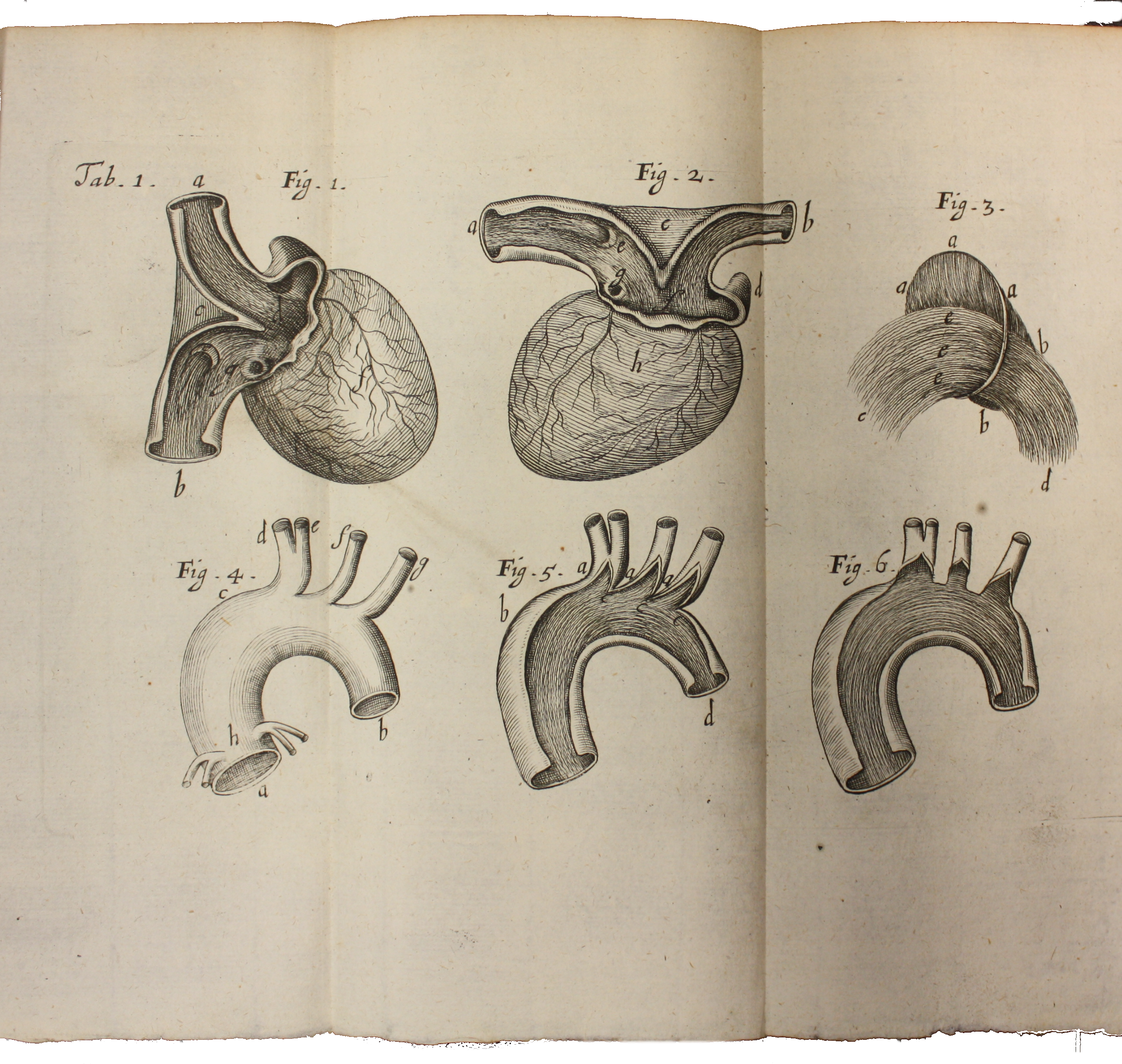 Engraved plate (table 1) showing diagrams of the heart