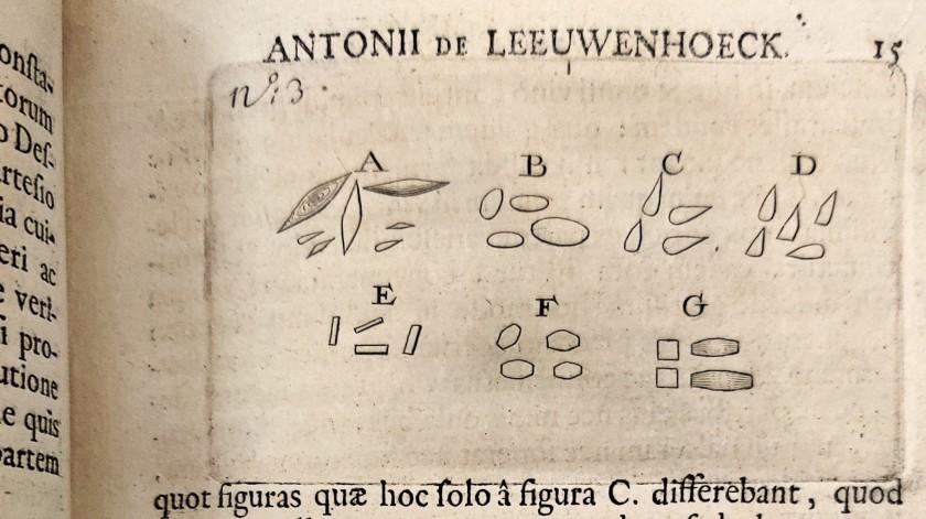 Illustration from Anatomia seu Interiora Rerum